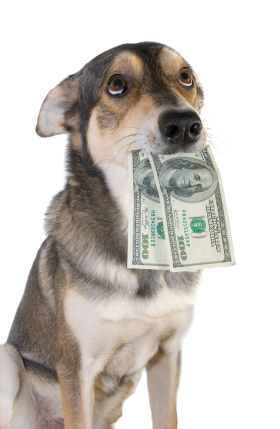 istock_000004659301xsmall-dog-with-200-bucks2%5B1%5D.jpg